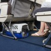 Safe Air Travel with Pets